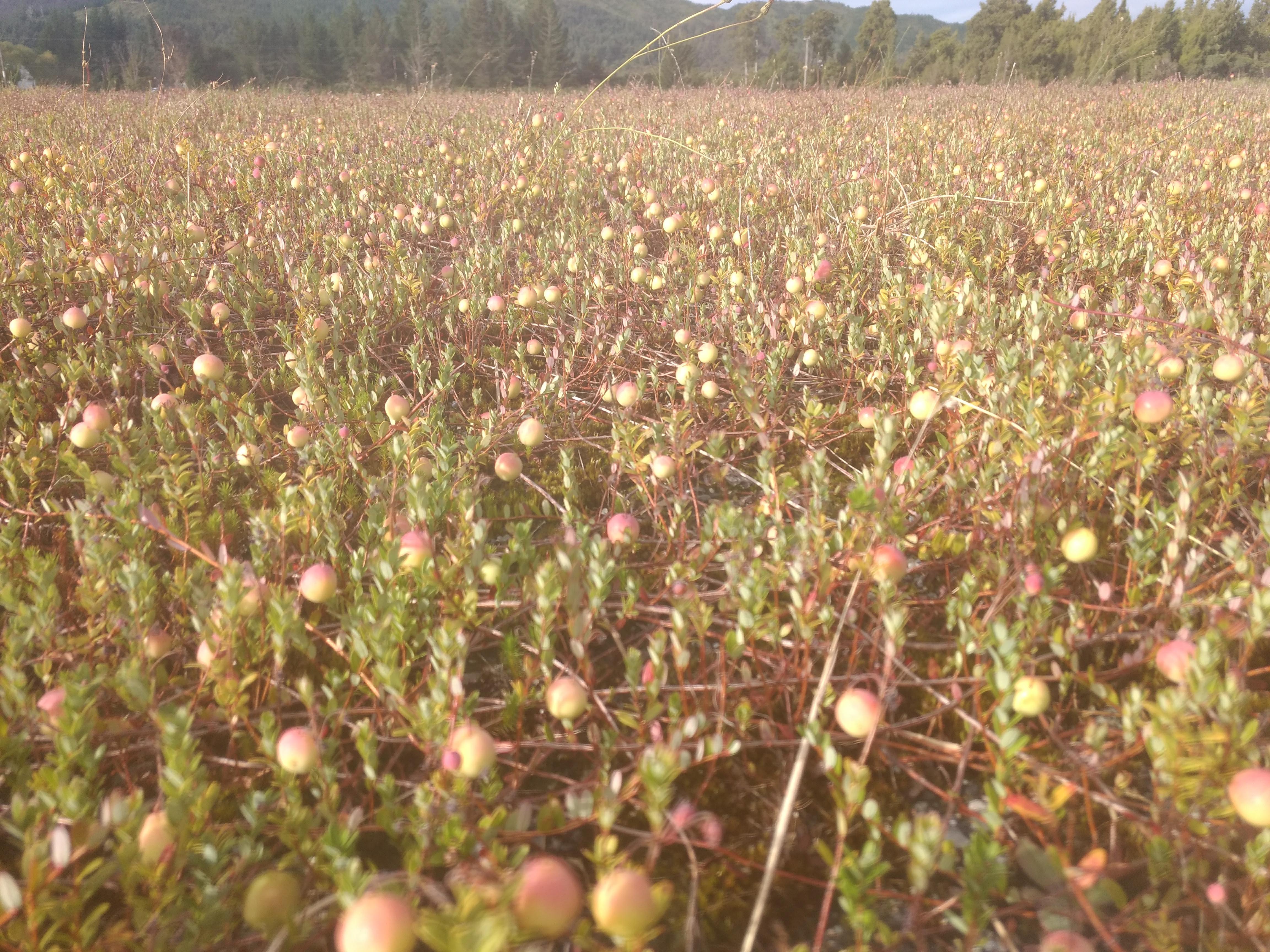 crop.  jan 19